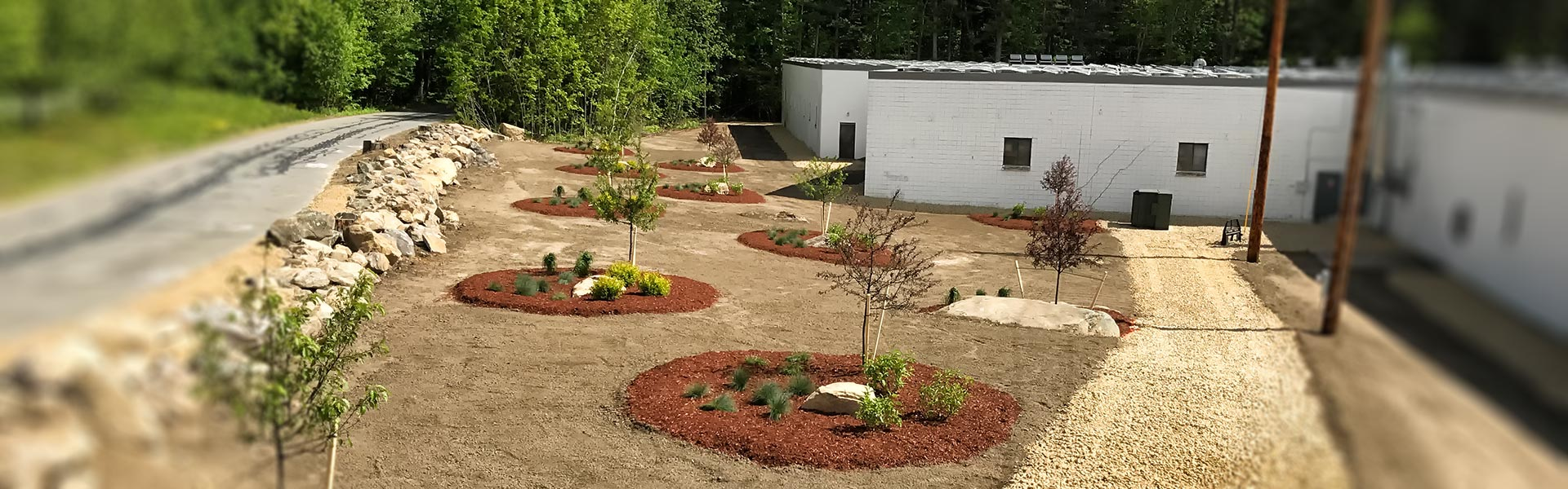 Commercial landscaping with new trees