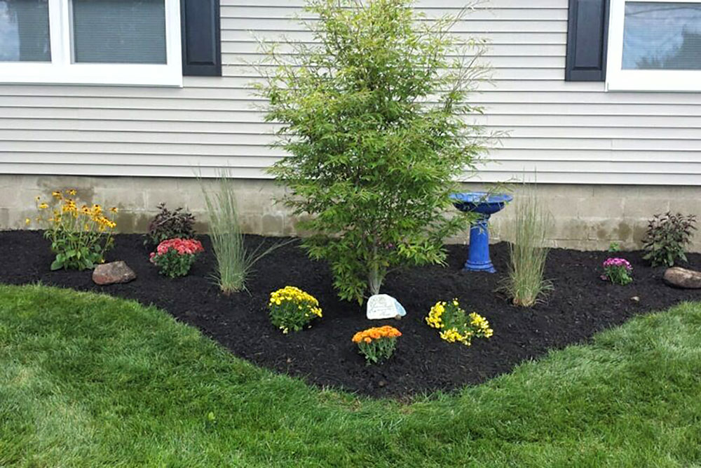 Bush an flower bed with freshlay laid mulch in front of house